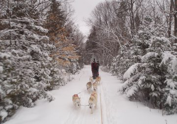 Portage Ontario Outward Bound Dog Sledding